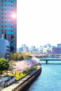 高層ビルと桜並木の写真素材 [FYI03827687]
