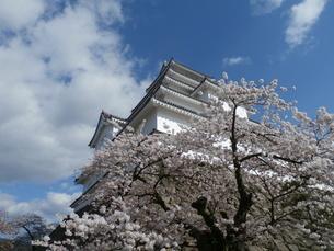 桜と鶴ヶ城の写真素材 [FYI03827699]