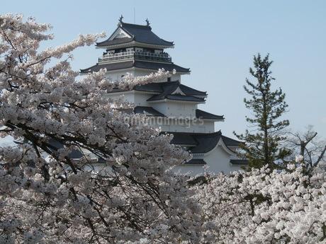 桜と鶴ヶ城2の写真素材 [FYI03827700]