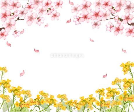 桜と菜の花のイラスト素材 [FYI03827802]