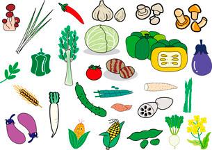 野菜のイラスト素材 [FYI03827960]