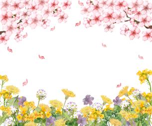 桜と春の花のイラスト素材 [FYI03828235]