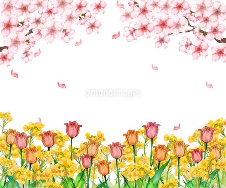 桜とチューリップと菜の花のイラスト素材 [FYI03828236]