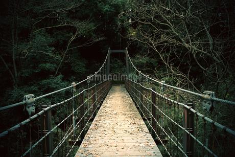 公園の中にある吊り橋の写真素材 [FYI03828262]