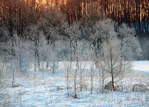 2月 厳冬期の北海道更別の霧氷の写真素材 [FYI03828306]
