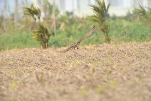 野鳥/鷹の写真素材 [FYI03828529]