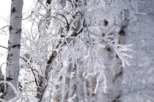 霧氷の写真素材 [FYI03828558]