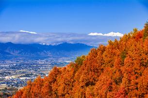 松本市郊外よりカラマツ林紅葉と安曇野平と冠雪の北アルプスの山並みの写真素材 [FYI03828582]