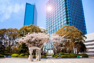 超高層ビルと桜の写真素材 [FYI03828837]