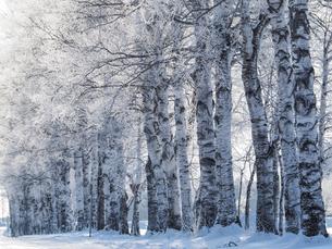 霧氷の写真素材 [FYI03829239]