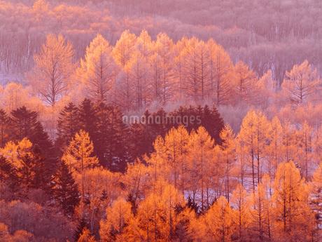 霧氷の写真素材 [FYI03829241]