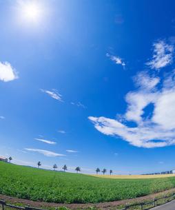 北海道 自然 風景 メルヘンの丘 青空と雲 の写真素材 [FYI03829421]