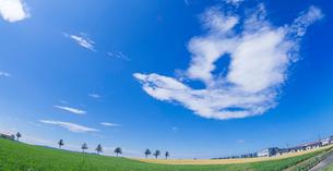 北海道 自然 風景 パノラマ メルヘンの丘 青空と雲 の写真素材 [FYI03829422]