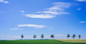 北海道 自然 風景 パノラマ メルヘンの丘 青空と雲 の写真素材 [FYI03829425]