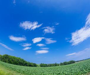 北海道 自然 風景  田園風景 青空と雲 の写真素材 [FYI03829430]