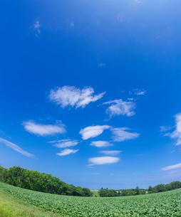 北海道 自然 風景  田園風景 青空と雲 の写真素材 [FYI03829431]