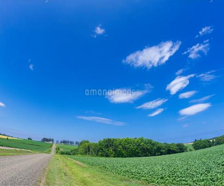 北海道 自然 風景  田園風景 青空と雲 の写真素材 [FYI03829432]