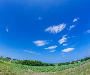北海道 自然 風景  田園風景 青空と雲 の写真素材 [FYI03829433]