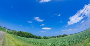 北海道 自然 風景 パノラマ  田園風景 青空と雲 の写真素材 [FYI03829434]