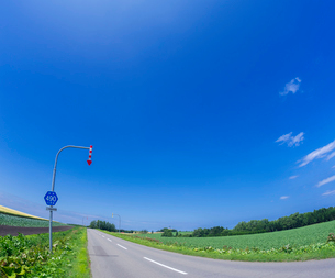 北海道 自然 風景 感動の道 一本道と青空 の写真素材 [FYI03829436]