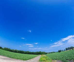 北海道 自然 風景 畑の一本道と青空 の写真素材 [FYI03829438]