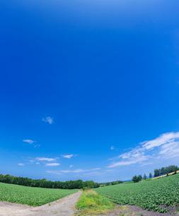北海道 自然 風景 畑の一本道と青空 の写真素材 [FYI03829439]