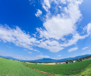 北海道 自然 風景 田園風景と青空 の写真素材 [FYI03829447]