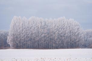 霧氷の写真素材 [FYI03829651]