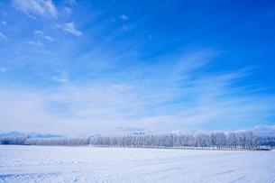 十勝の冬の写真素材 [FYI03829652]