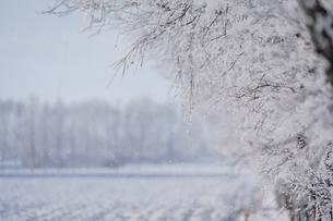 霧氷の写真素材 [FYI03829654]