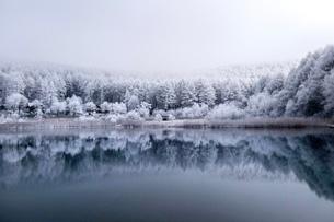 霧氷 聖高原の冬景色の写真素材 [FYI03829733]