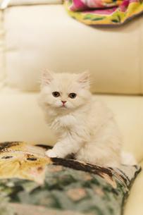 仔猫ちゃんの写真素材 [FYI03829777]