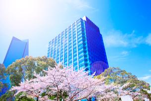 超高層ビルと桜の写真素材 [FYI03829780]