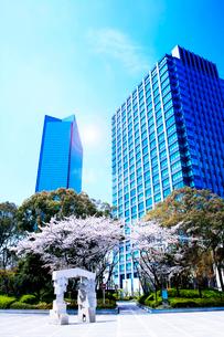 高層ビルと桜と広場の写真素材 [FYI03829884]