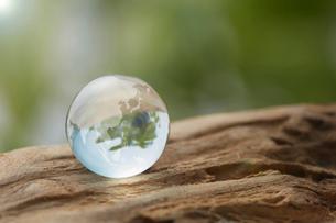 流木の上のガラスの地球の写真素材 [FYI03830072]