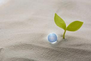 砂の上のガラスの地球と葉っぱの写真素材 [FYI03830074]