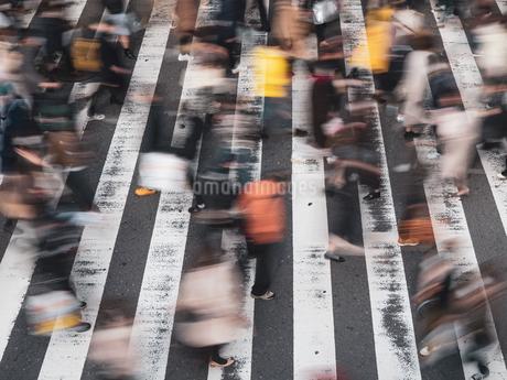 横断歩道を渡る歩行者の様子の写真素材 [FYI03830676]