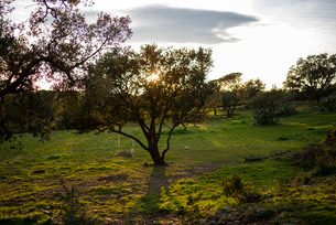 誰もいない草原の大きな木に括られて揺れるブランコが日没前の太陽の光を受ける光景の写真素材 [FYI03830833]