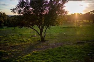 誰もいない草原の大きな木に括られて揺れるブランコが日没前の太陽の光を受ける光景の写真素材 [FYI03830836]