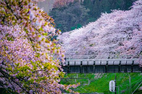 春の山北駅(神奈川県足柄上郡)の写真素材 [FYI03830842]