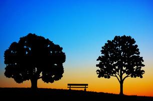夕暮れの丘のベンチと木の写真素材 [FYI03830848]