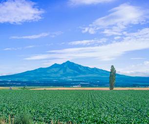 北海道 自然 風景 田園風景と斜里岳遠望の写真素材 [FYI03831156]