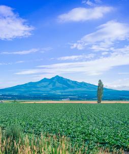 北海道 自然 風景 田園風景と斜里岳遠望の写真素材 [FYI03831157]