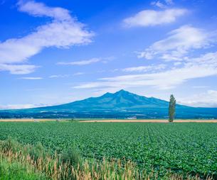 北海道 自然 風景 田園風景と斜里岳遠望の写真素材 [FYI03831158]
