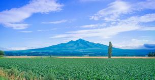 北海道 自然 風景 パノラマ 田園風景と斜里岳遠望の写真素材 [FYI03831159]