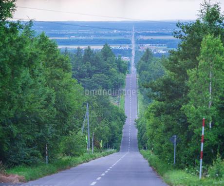 北海道 自然 風景 並木を通る一本道の写真素材 [FYI03831160]