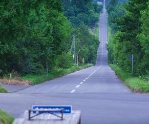 北海道 自然 風景 並木を通る一本道の写真素材 [FYI03831161]