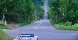 北海道 自然 風景 パノラマ 並木を通る一本道の写真素材 [FYI03831162]
