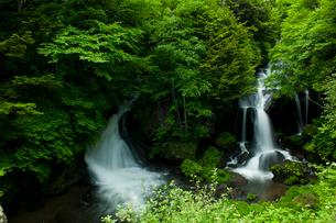 新緑の竜頭ノ滝の写真素材 [FYI03831461]