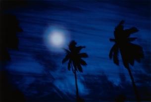夜空に浮かぶ月とヤシの木のシルエットの写真素材 [FYI03831592]